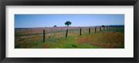 Framed Wildflower Field, Texas