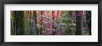 Framed Virginia, Shenandoah National Park