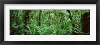 Framed Monteverde Cloud Forest Reserve, Costa Rica