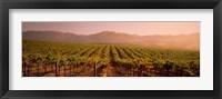 Framed Vineyard in Geyserville, CA