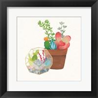 Framed Succulent Garden III