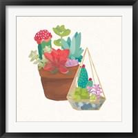 Framed Succulent Garden IV