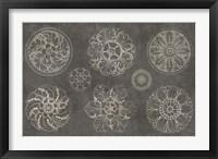 Framed Rosette IX Gray