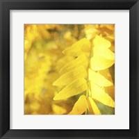 Autumn Photography III Framed Print