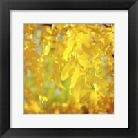 Autumn Photography IV Framed Print