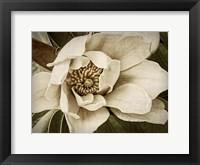 Classic Magnolia I Framed Print
