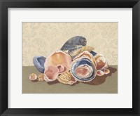 Shell Collection I Framed Print