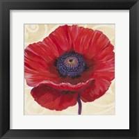 Red Poppy II Framed Print