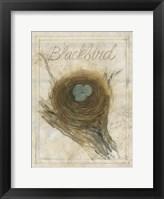 Framed Nest - Blackbird