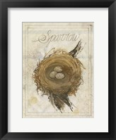 Nest - Sparrow Framed Print