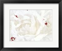 White Linen Peony I Framed Print