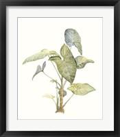 Tropical Watercolor Leaves IV Framed Print