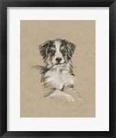 Breed Sketches IV Framed Print