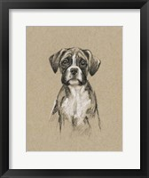Breed Sketches V Framed Print