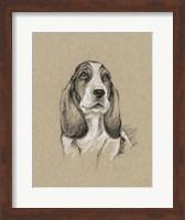 Framed Breed Sketches VI