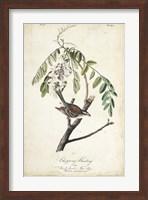 Framed Delicate Bird and Botanical I