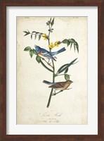 Framed Delicate Bird and Botanical IV