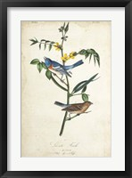 Delicate Bird and Botanical IV Framed Print