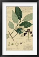 Descubes Foliage & Fruit I Framed Print