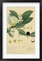Descubes Foliage & Fruit II Framed Print