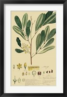 Descubes Foliage & Fruit IV Framed Print