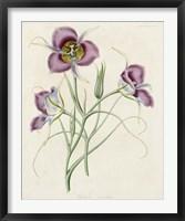 Lavender Blooms I Framed Print