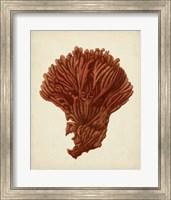 Framed Antique Red Coral I