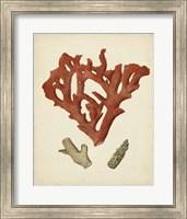 Framed Antique Red Coral II