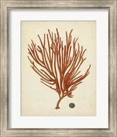 Framed Antique Red Coral IV
