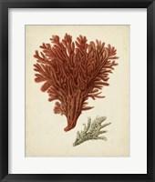 Antique Red Coral V Framed Print