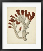 Antique Red Coral VI Framed Print