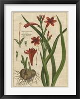 Botanical Study on Linen II Framed Print
