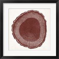 Tree Ring I Framed Print