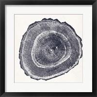 Tree Ring III Framed Print