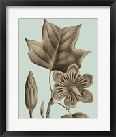 Flowering Trees I Framed Print