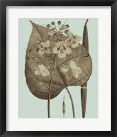 Flowering Trees II Framed Print