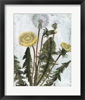 Dandelion Patina II Framed Print