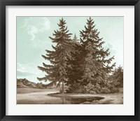 Serene Trees III Framed Print