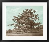 Serene Trees VI Framed Print