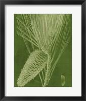 Modern Pine II Framed Print