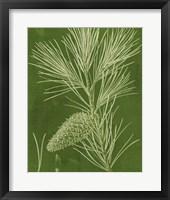 Modern Pine V Framed Print