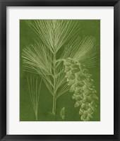 Modern Pine VI Framed Print