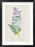 Watercolor Plants I Framed Print