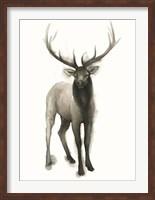 Framed Majestic Wildlife II
