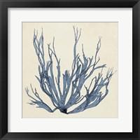 Coastal Seaweed I Framed Print