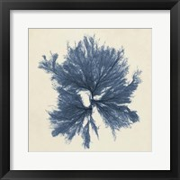 Framed Coastal Seaweed V