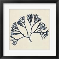 Framed Coastal Seaweed VI