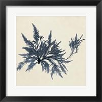 Framed Coastal Seaweed VII