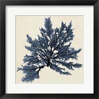 Framed Coastal Seaweed IX