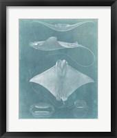 Morning Swim II Framed Print